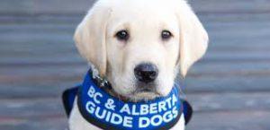 alberta guide dogs